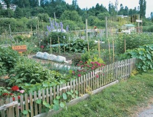 Patches of Heaven community garden