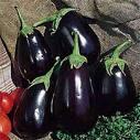 black-beauty-eggplant-seeds