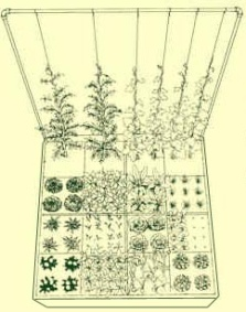 The Vertical Trellis Garden